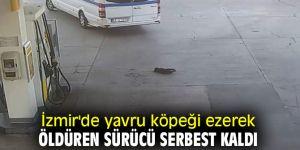 Yavru köpeği ezerek öldüren sürücü serbest kaldı