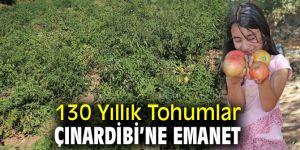 Bayındır'da Yerli Tohumdan Pembe Domates Üretiyor