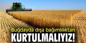 Buğdayda dışa bağımlılıktan kurtulmalıyız!