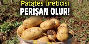 Patates üreticisi perişan olur!
