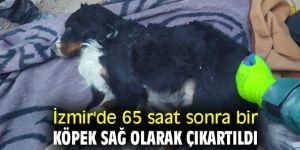 65 saat sonra bir köpek sağ olarak çıkartıldı