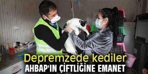 Depremzede kediler AHBAP'ın çiftliğine emanet