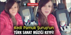 Kedi Pamuk Şurup'un Türk Sanat Müziği keyfi!