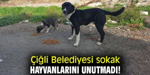 Çiğli Belediyesi sokak hayvanlarını unutmadı!