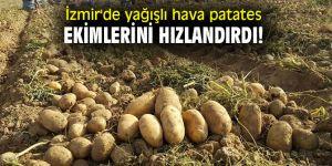 İzmir'de yağışlı hava patates ekimlerini hızlandırdı