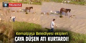 Kemalpaşa Belediyesi ekipleri çaya düşen atı kurtardı!
