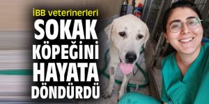 İBB veterinerleri sokak köpeğini hayata döndürdü!