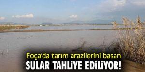 Foça'da tarım arazilerini basan sular tahliye ediliyor!