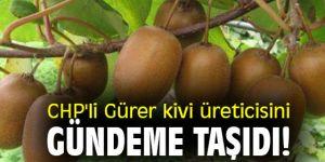 CHP'li Gürer kivi üreticisini gündeme taşıdı!