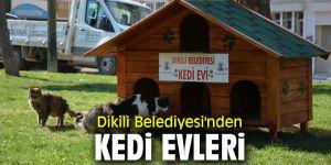 Dikili Belediyesi'nden kedi evleri