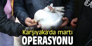 Karşıyaka'da martı operasyonu