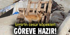 İzmir'in cesur köpekleri göreve hazır!