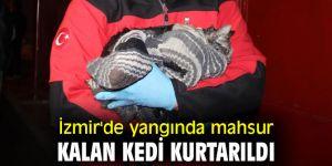 İzmir'de yangında mahsur kalan kedi kurtarıldı
