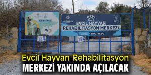 Evcil Hayvan Rehabilitasyon Merkezi yakında açılacak