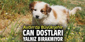Aydın'da Büyükşehir can dostları yalnız bırakmıyor!