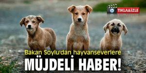 Bakan Soylu'dan hayvanseverlere müjdeli haber!
