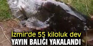 İzmir'de 55 kiloluk dev yayın balığı oltaya takıldı