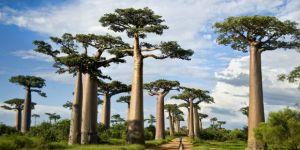 Araştırmacılar uyardı: Ağaç ölümleri dünyayı tehdit ediyor!