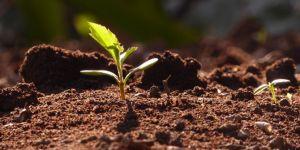 Toprağı koru, iklimi koru