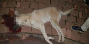 Pompalı tüfekle köpekleri vurdu, tehdit edip kaçtı