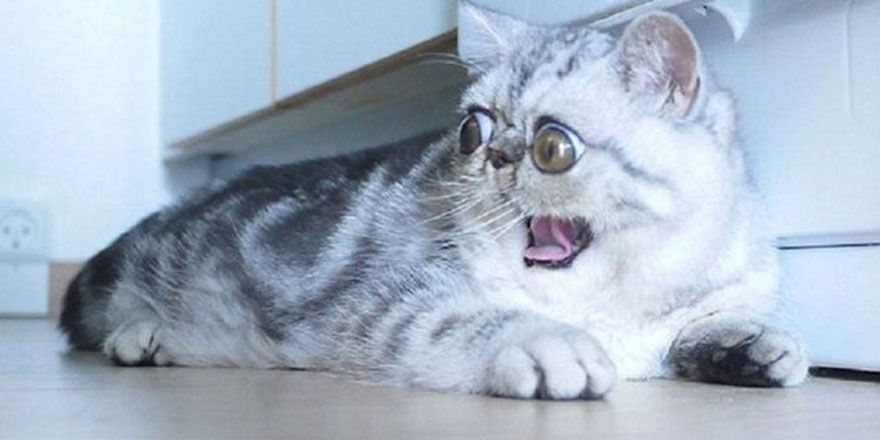 İzleyeni gülmekten kırıp geçiren korkak kediler!