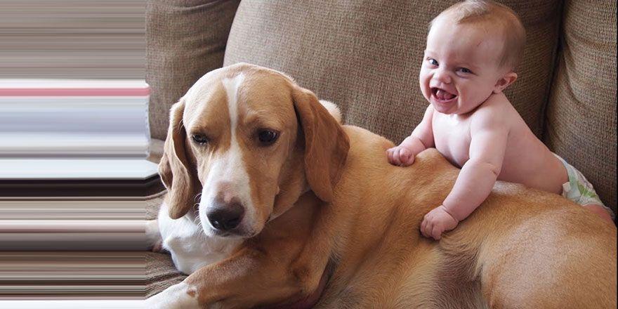 Birlikte oynayan sevimli bebekler ve köpekler!